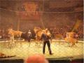 Львы и тигры в цирке Братьев Запашных